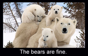 the bears are fine